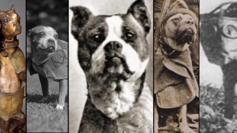 Los perros héroes: la historia de dos perros soldado de la Gran Guerra